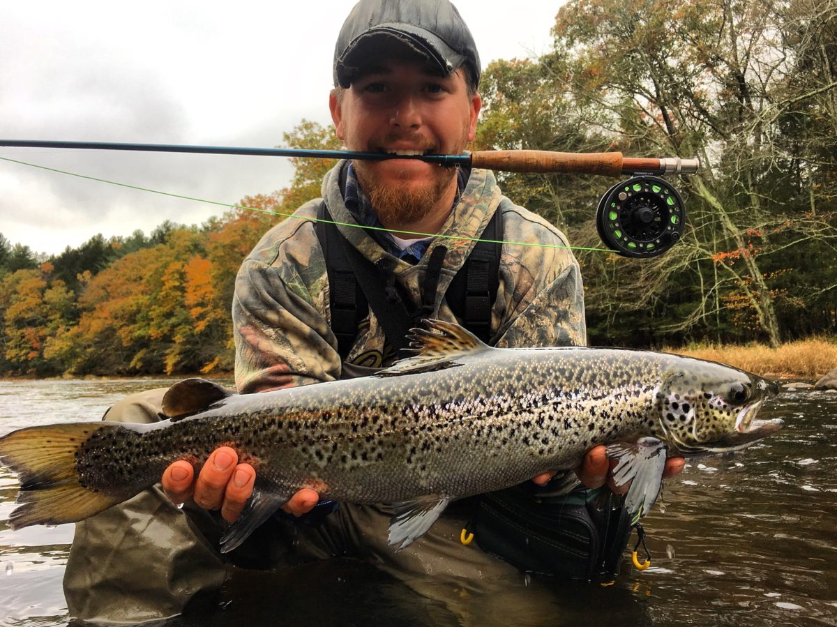 2017 1 Naugatuck River Atlantic Salmon