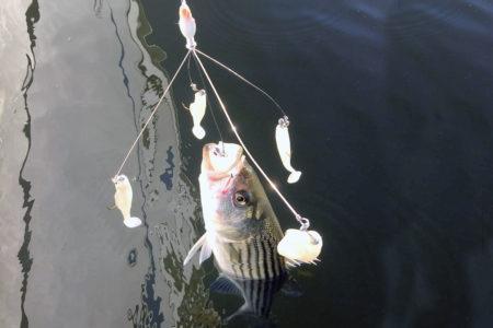 2017 1 Riggin Fishin Alabama Rigss