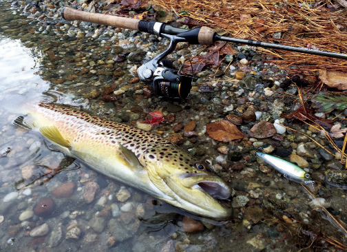 2017 1 Open Water Winter Trout