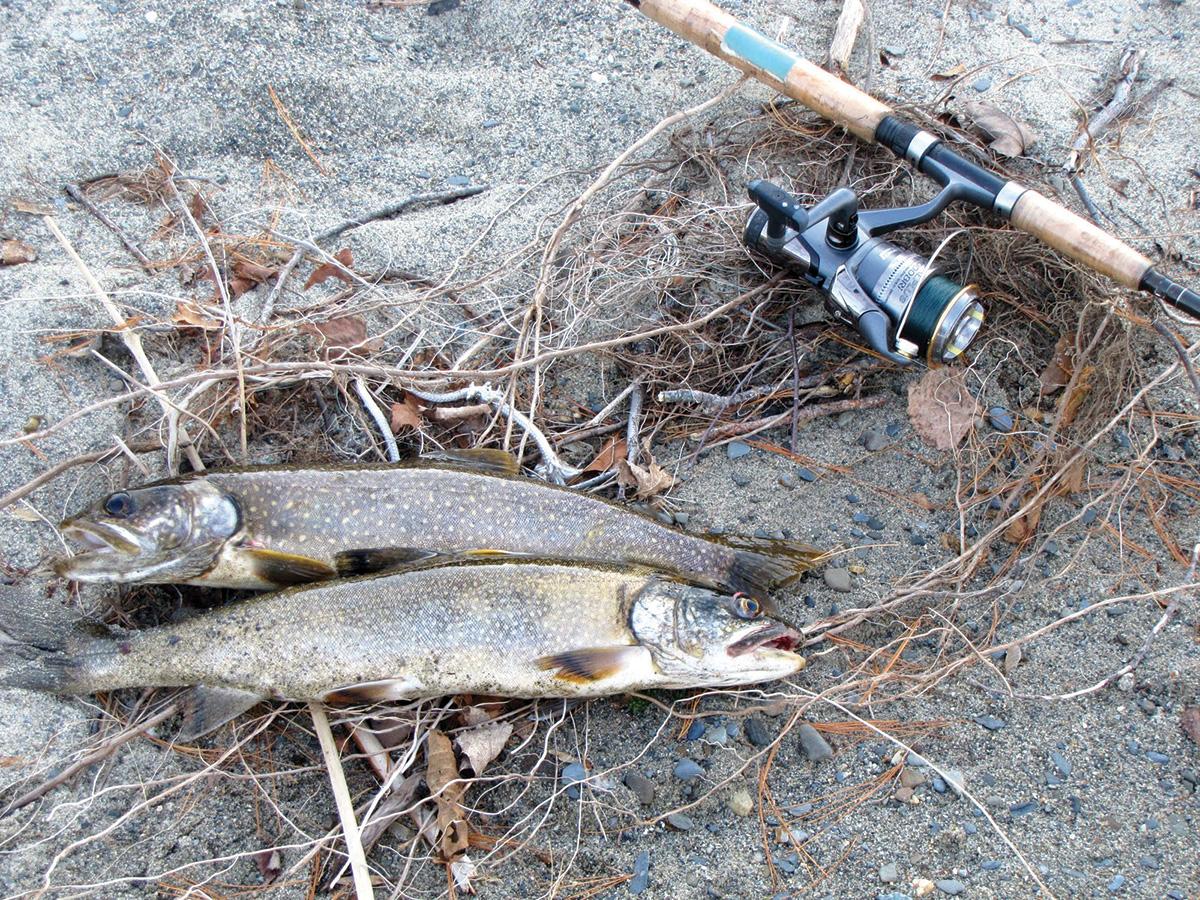 2017 10 Wachusett Reservoir Tactics Fishes
