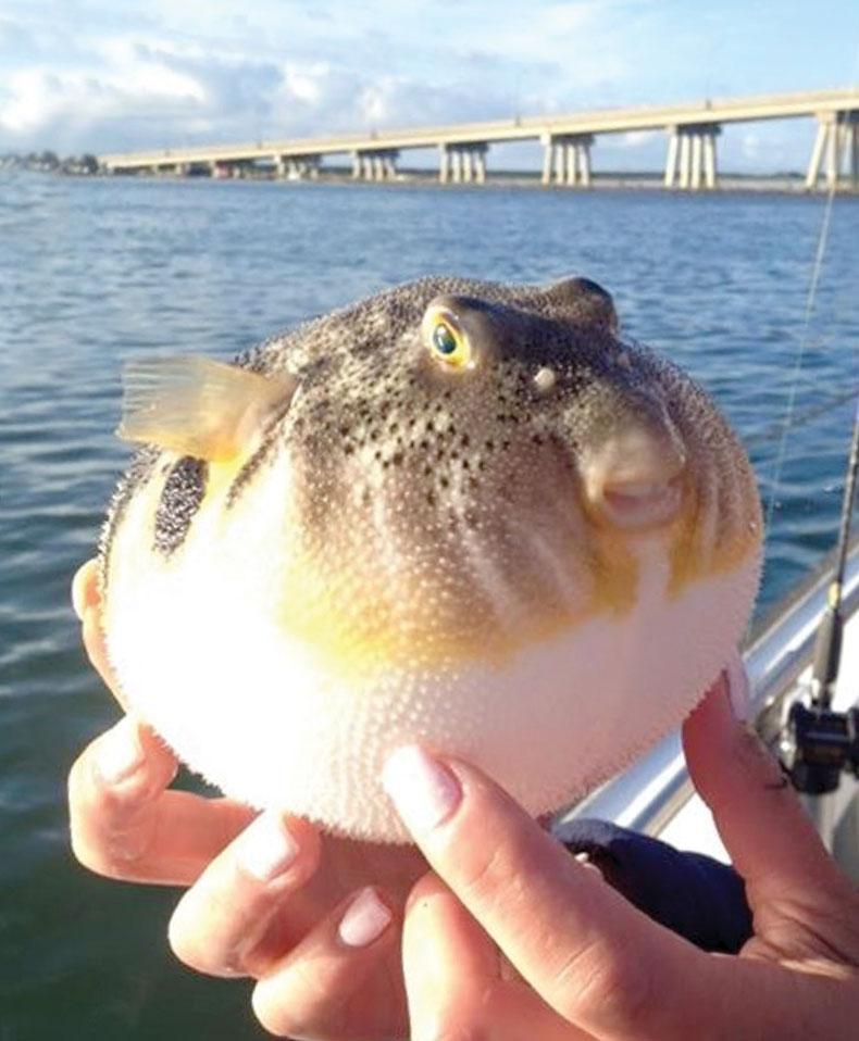 2017 2 Management Needed Blowfish