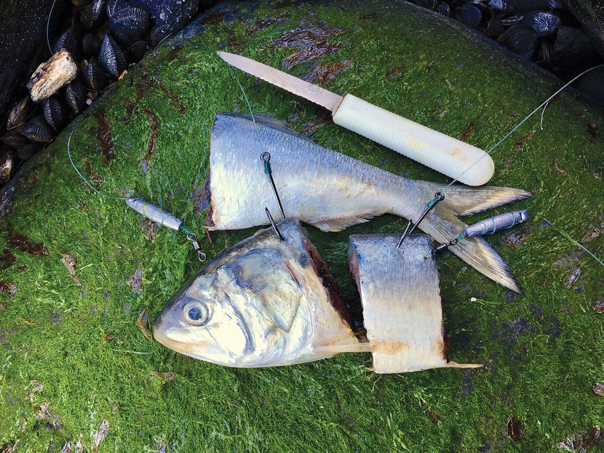 Chunking Back Bay Bass Cut
