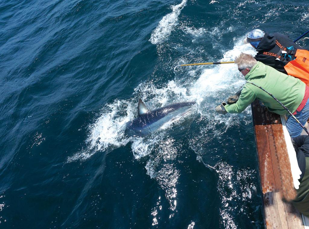 Sharpen Your Sharking Skills