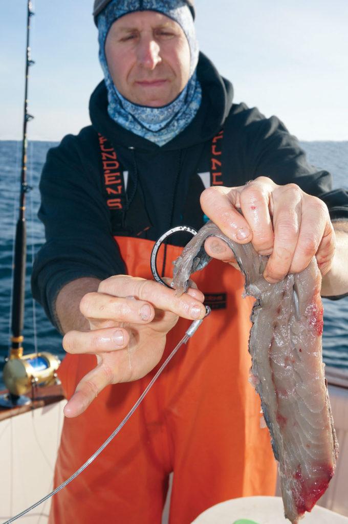 Sharpen Your Sharking Skills Mushin