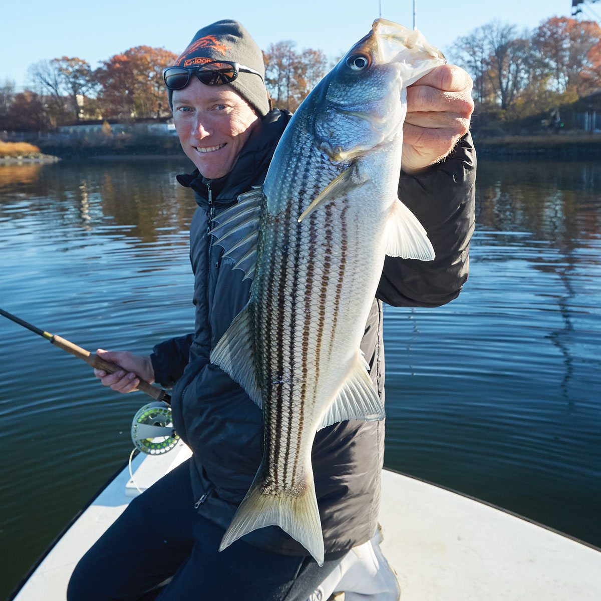 Stripers On The Rebound Small