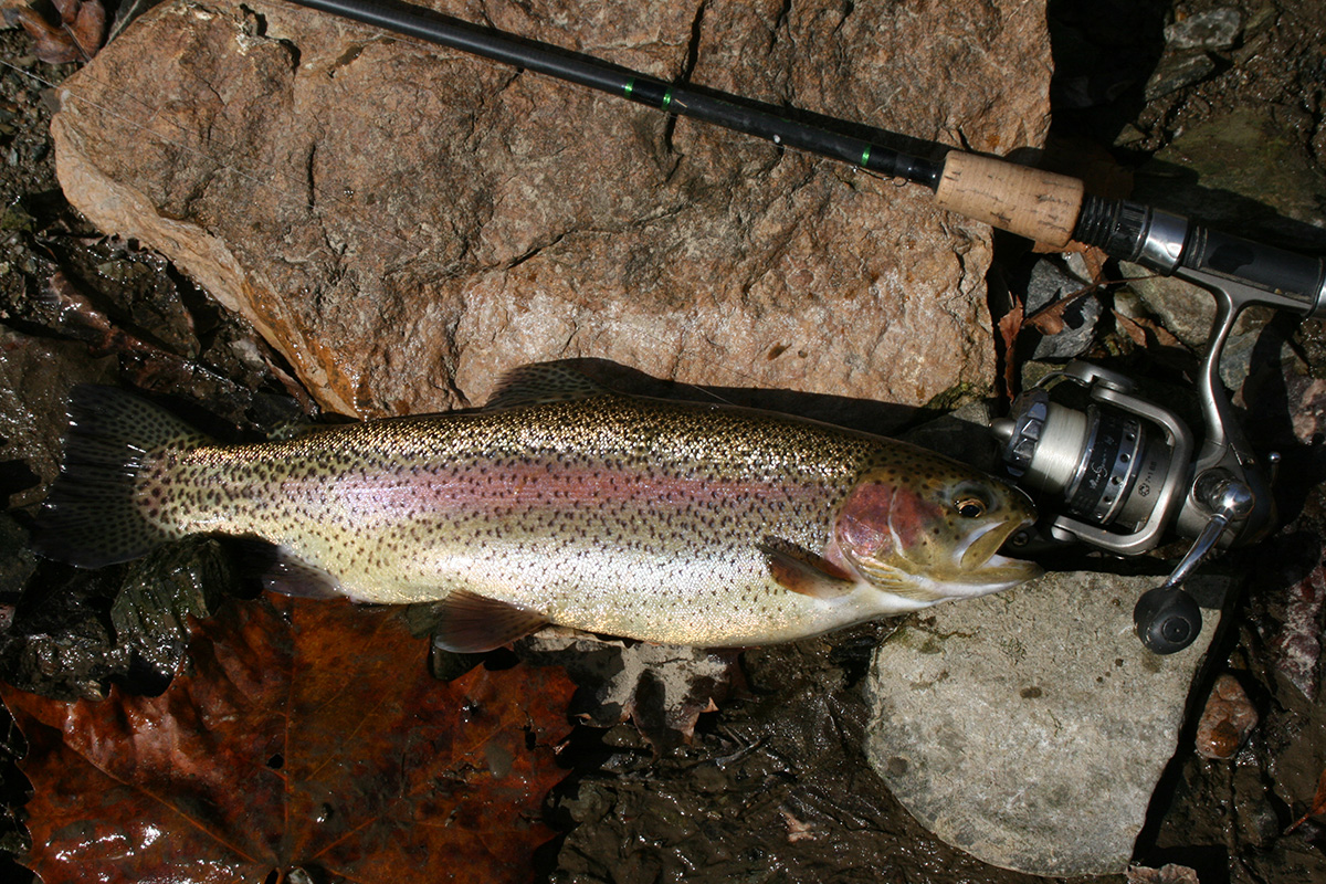2017 6 Trout Fishing The Lehigh River Trout 2