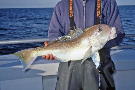 2017 8 Deep Drop Bottom Fishing Tilefish