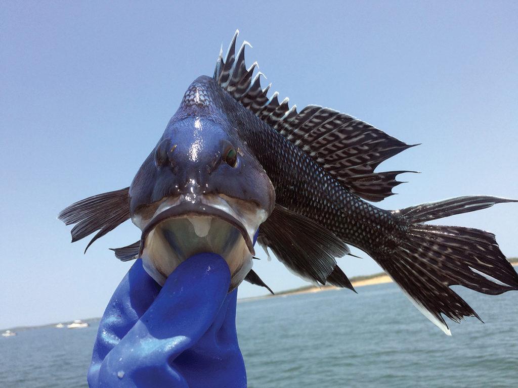 2017 9 Whole Sea Bass