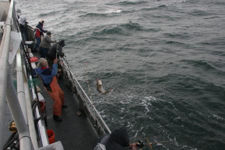 2018 2 Cod Pollock Ling Boat