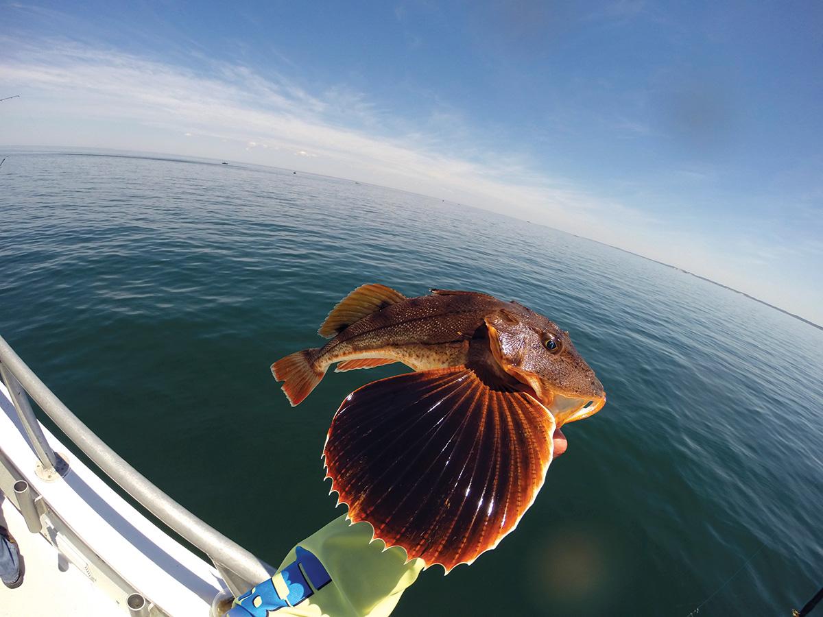 2018 4 Dream Boat Fish
