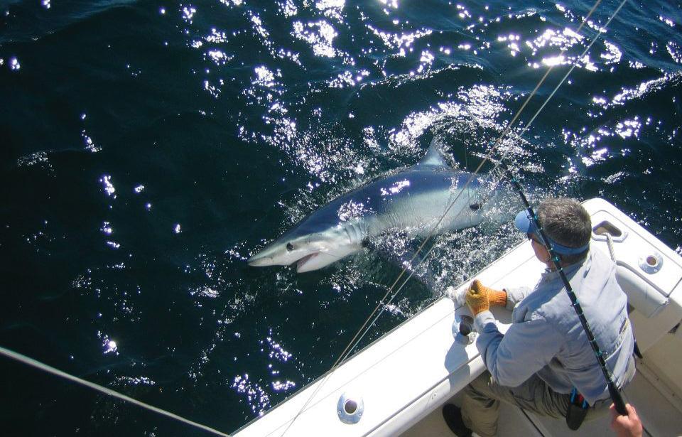 2017 10 New Shark Regulations Big Blue