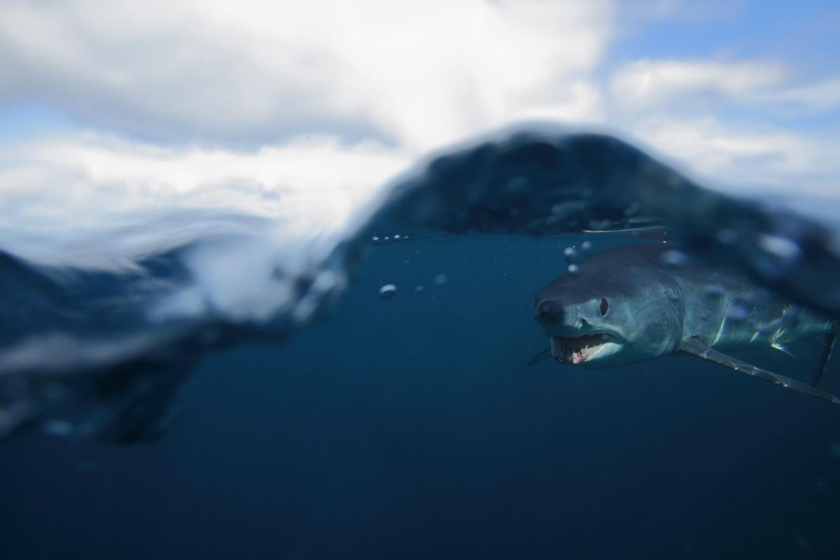 2017 10 New Shark Regulations Shark