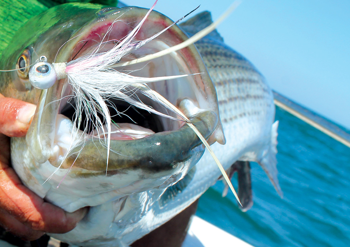 2017 8 Light Tackling Big Water Stripers Mouth Fish