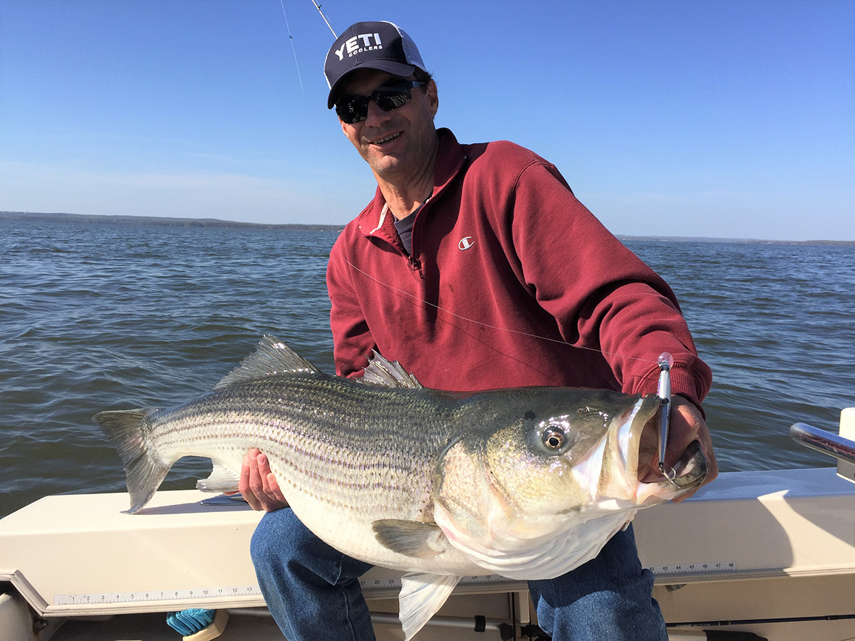 2018 2 Big Stripers For Little Trip SPAWNING FISH