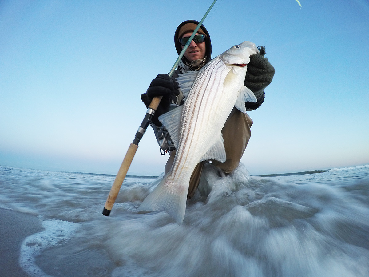 2018 3 Scale Down For Stripers Catch