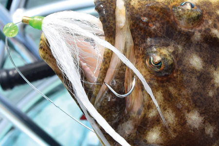 2018 4 The Importance Of Scent In Flucking FLUKE SNOUT