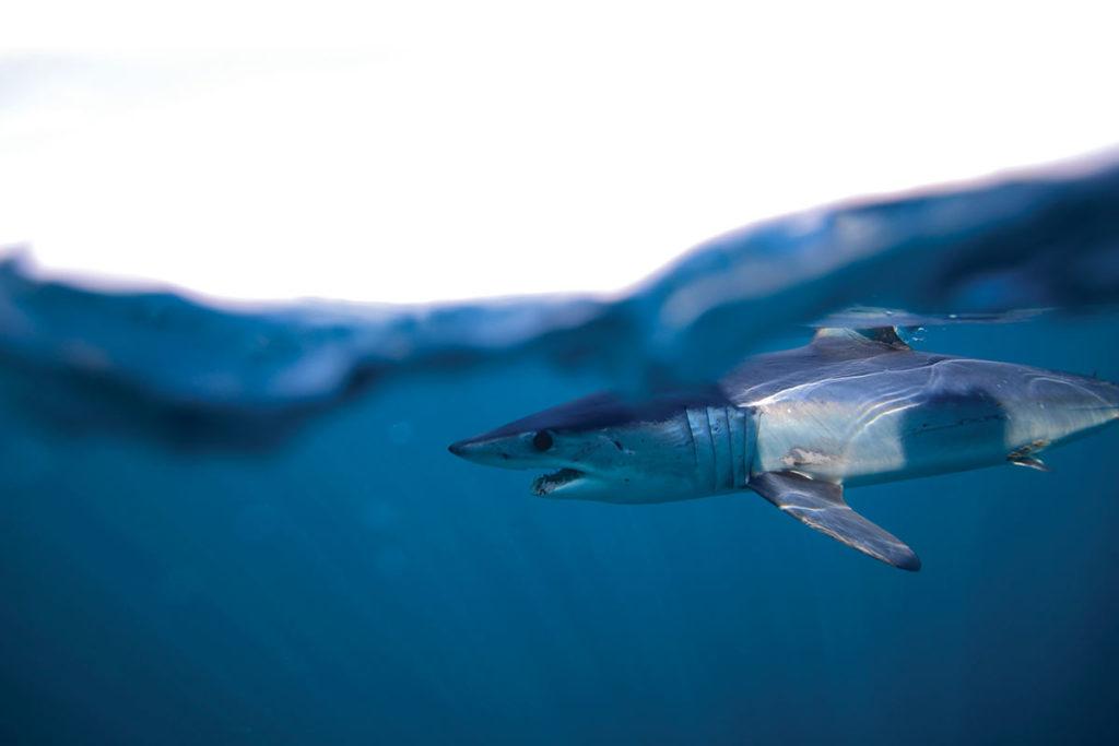 2018 6 Shark Science Shark