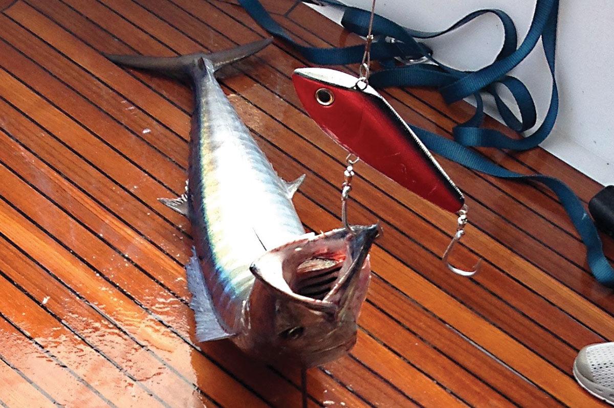 2018 7 Target A Wahoo Fish