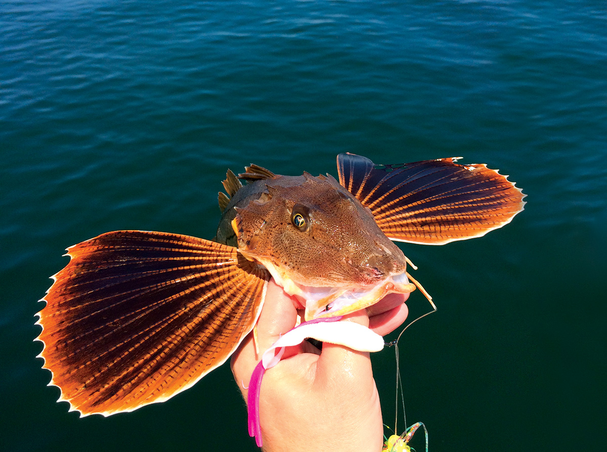 2018 8 Searobbins Trash Fish No More Searobbins