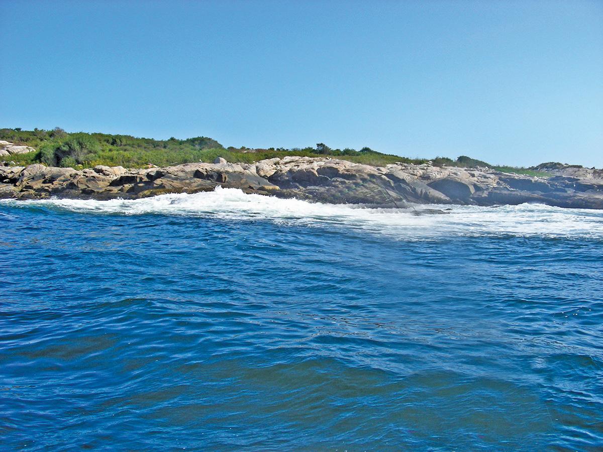 2018 9 Bass Blues Bluefin Cape Ann