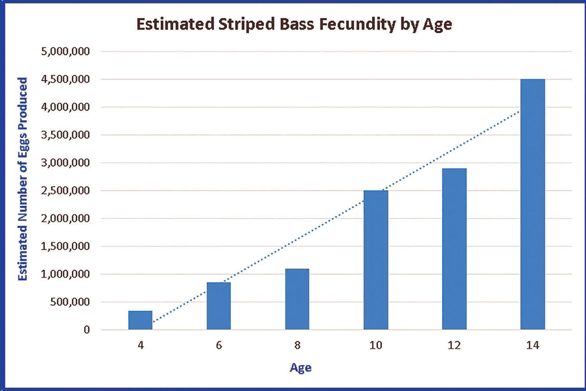 2018 11 Do Bigger Stripers Make Better Spawners STRIPED BASS FECUNDITY