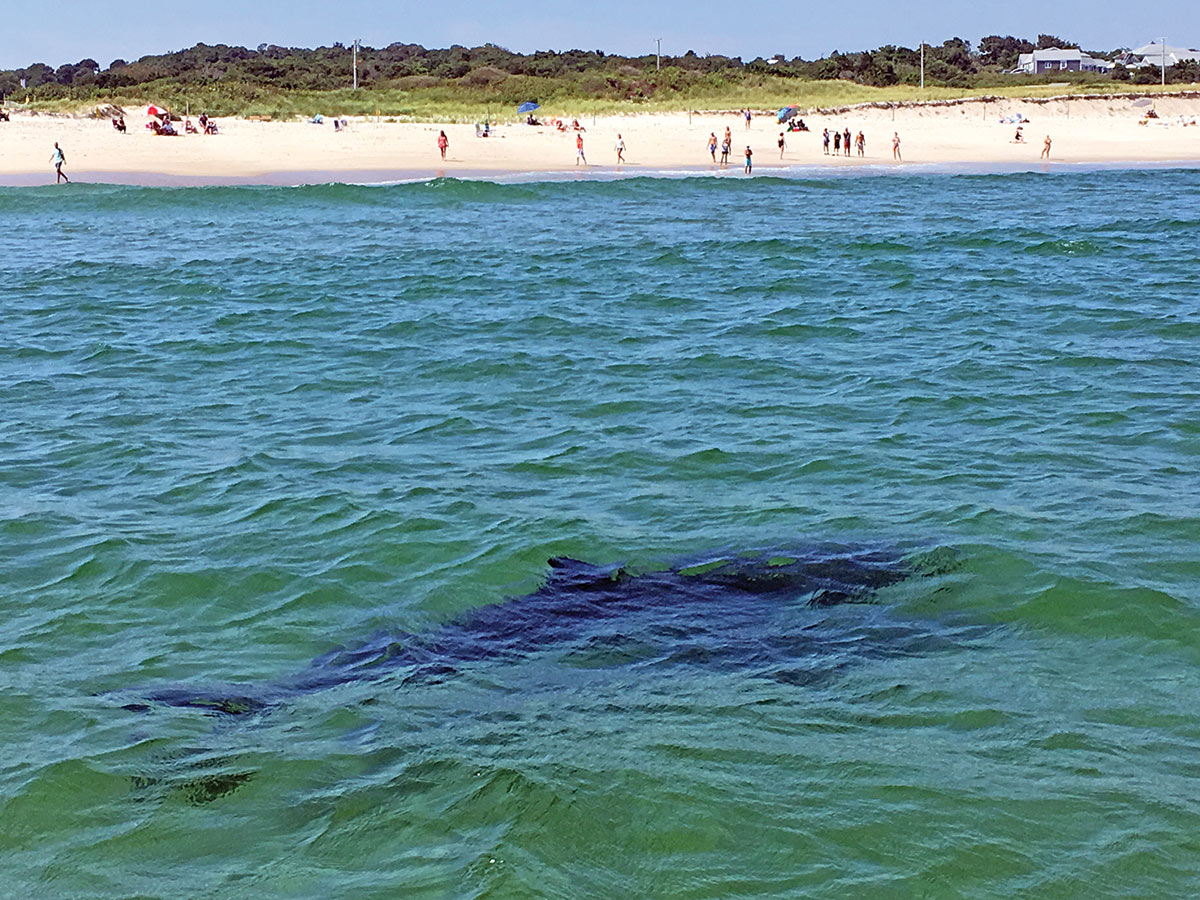2019 3 The State Of The Shark Beach