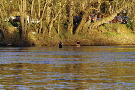 2019 3 Wading For Delaware Shad Water