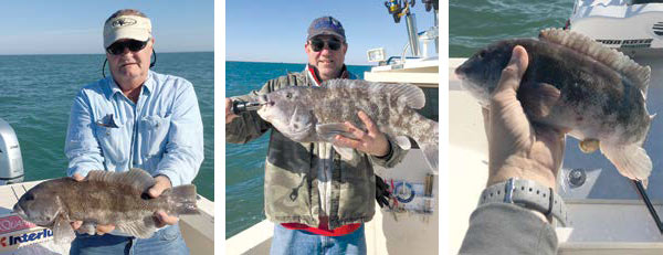 2019 4 Game Changing Tautog Catch