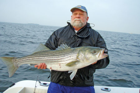 2019 4 Striped Bass Where Are We Headed Catch