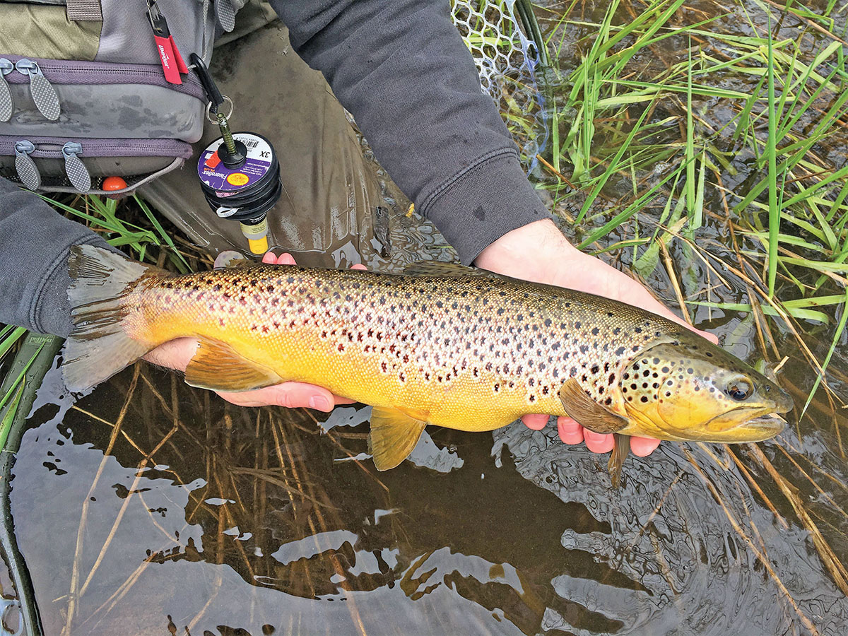 2019 4 Trout Traditions Opening Daze Fish