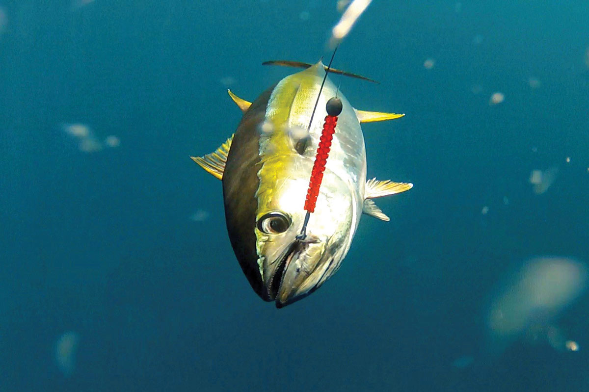 Fish attached to aline underwater
