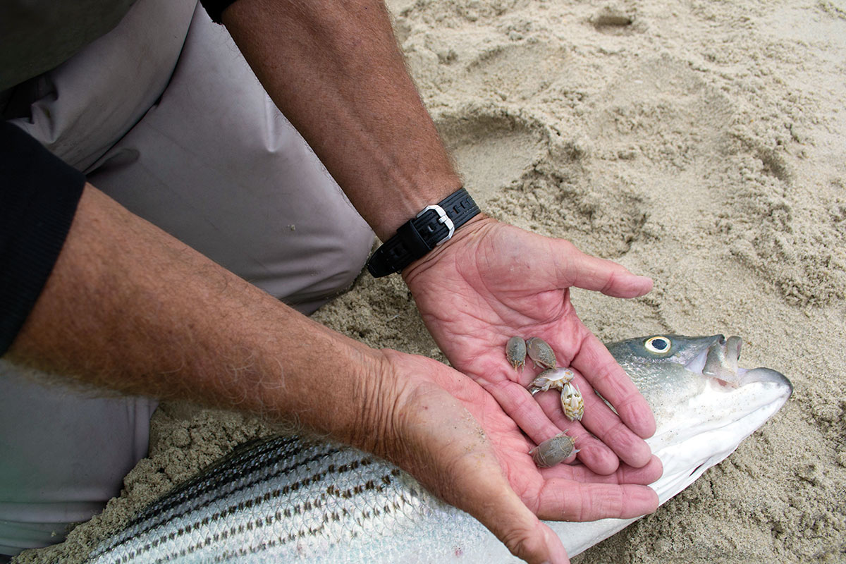 Man holding mole carbs in his hands with a large fish behind his hands