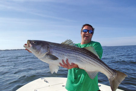Nick Honachefsky holding a big striper horizontally with one hand underneath to support the weight of the fish.