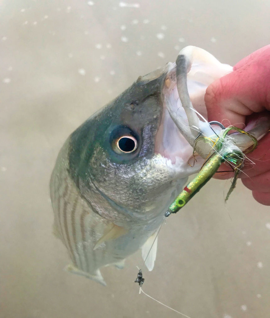 Fish attached to hook with artificial bait