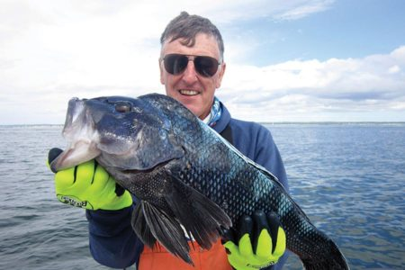 Man with glasses holding up a huge black sea bass