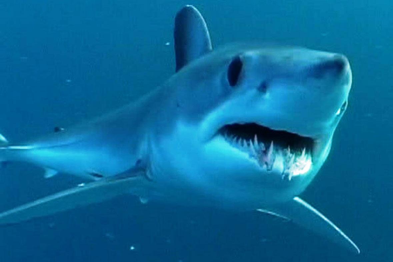 Shark showing teeth swimming underwater