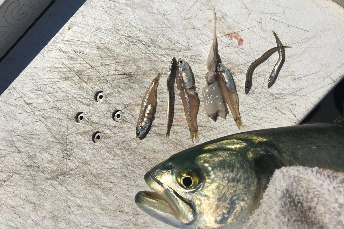 Stomach contents of fish will give you a clue on what bait to use