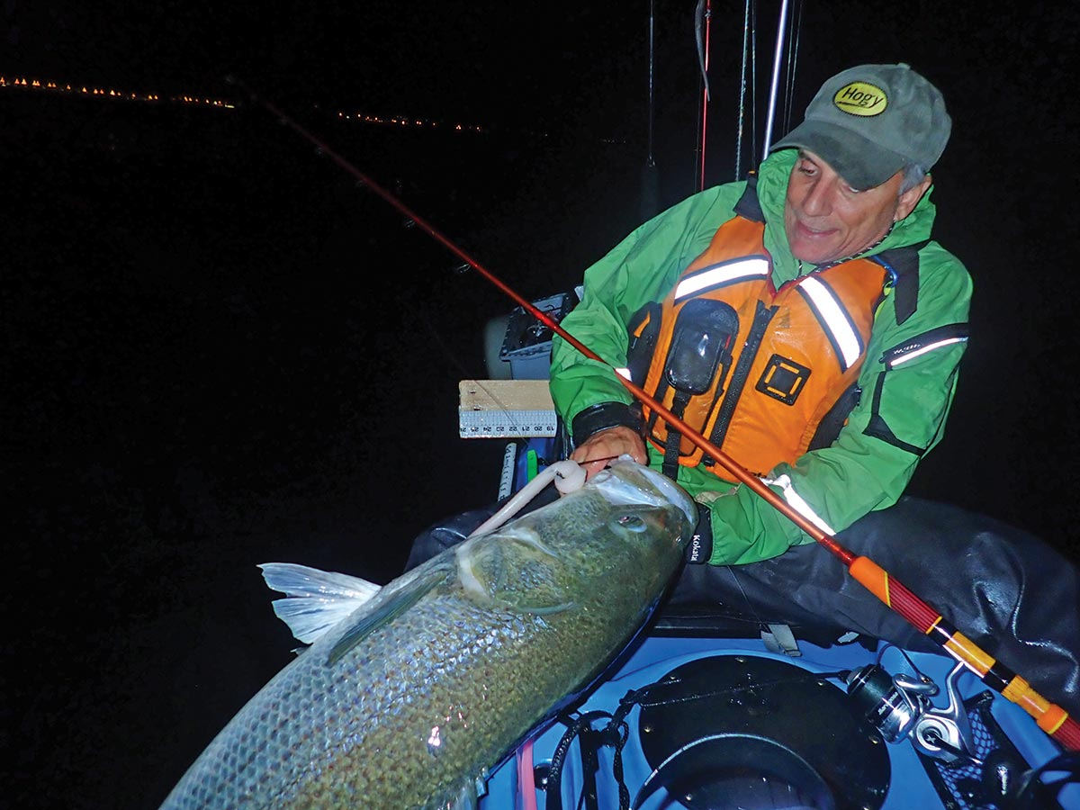 Eric Harrison used 10-inch white Original Hogy mounted on a Barbarian Swimbait hook this large striped bass