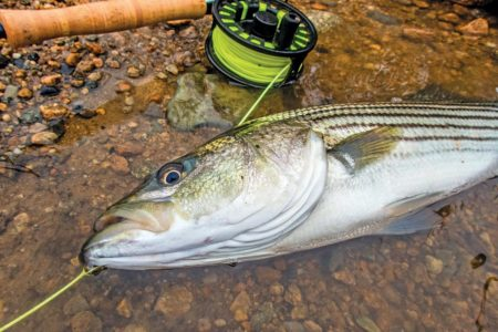 fish with fly line and rod