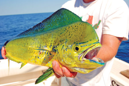 Mahi are dazzling in appearance and a thrill to catch on the fly rod.