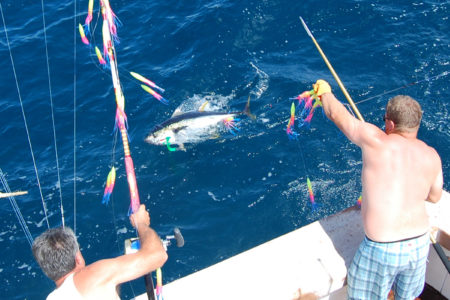 Yellowfin were partial to multicolored spreader bars on this particular day