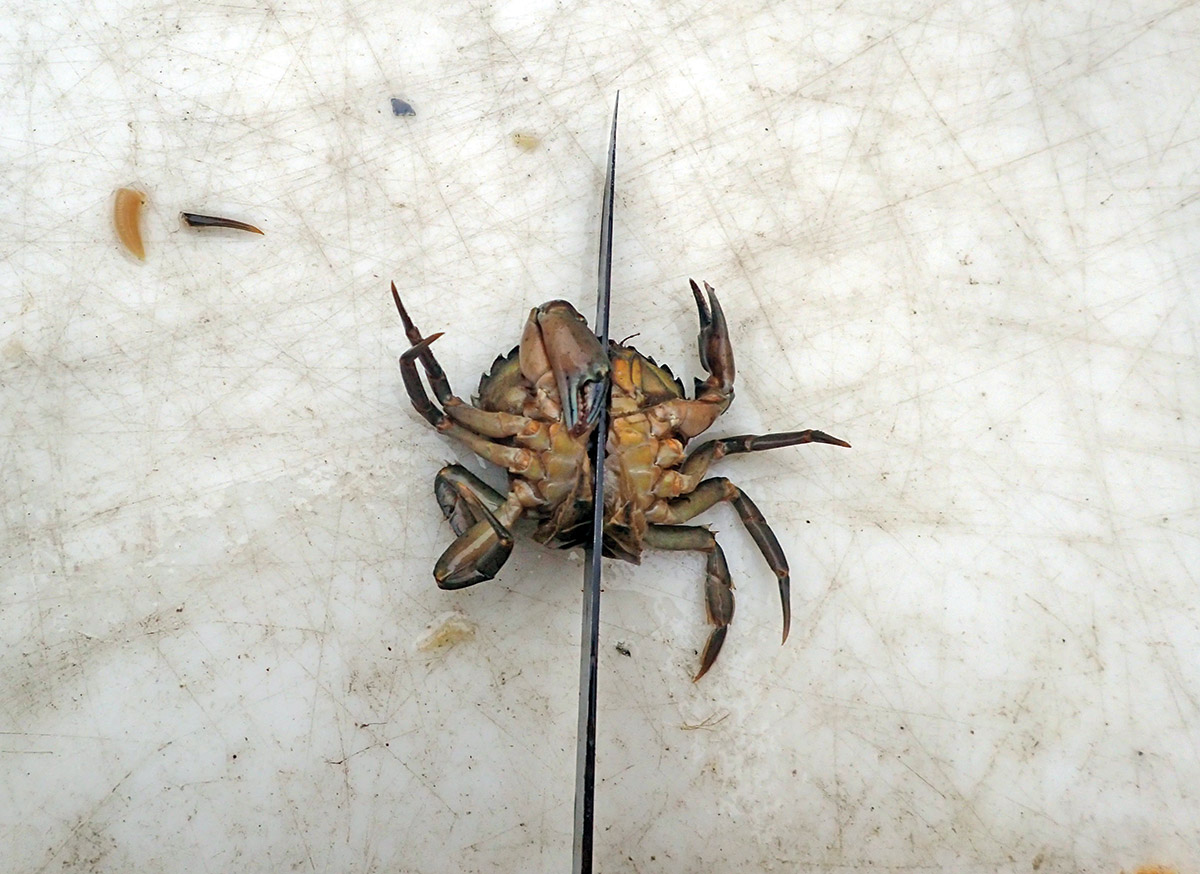 Trigger anglers should cut crabs in half or in quarters. No need to use entire crabs.