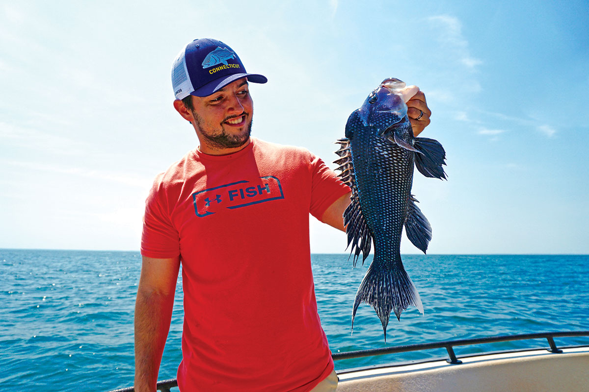 Black sea bass can be very aggressive feeders