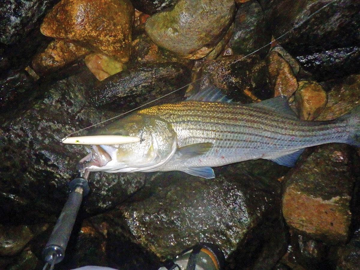 a high 20-pound bass