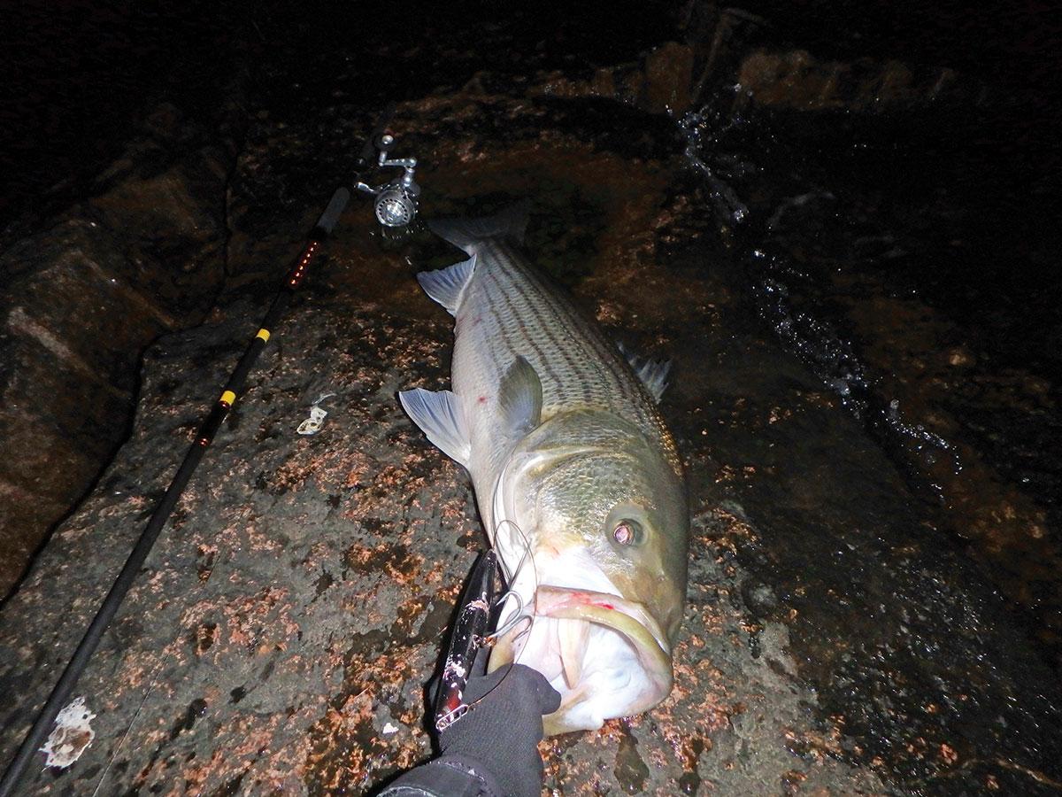 29-pound bass