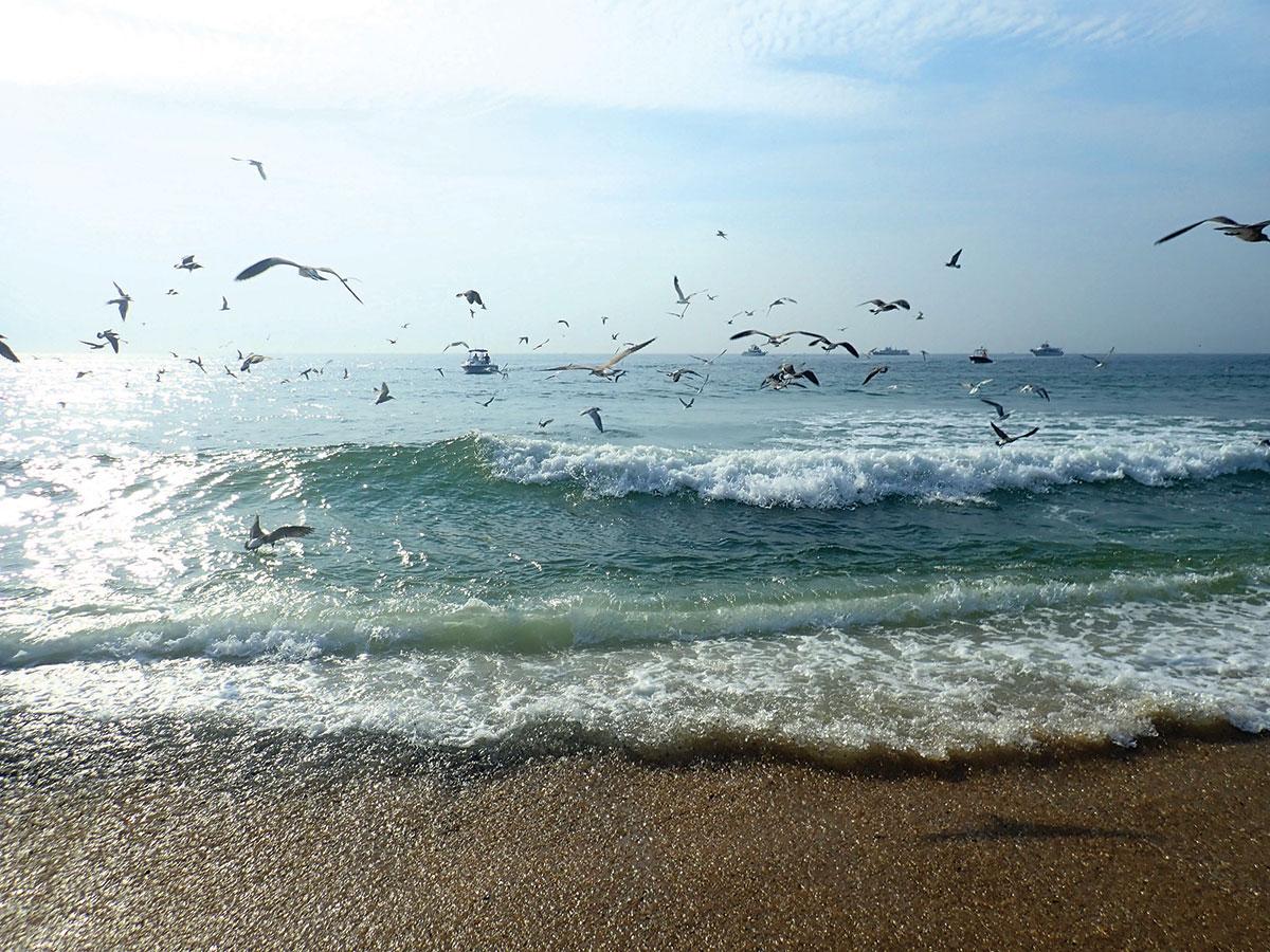 beach replenishment efforts