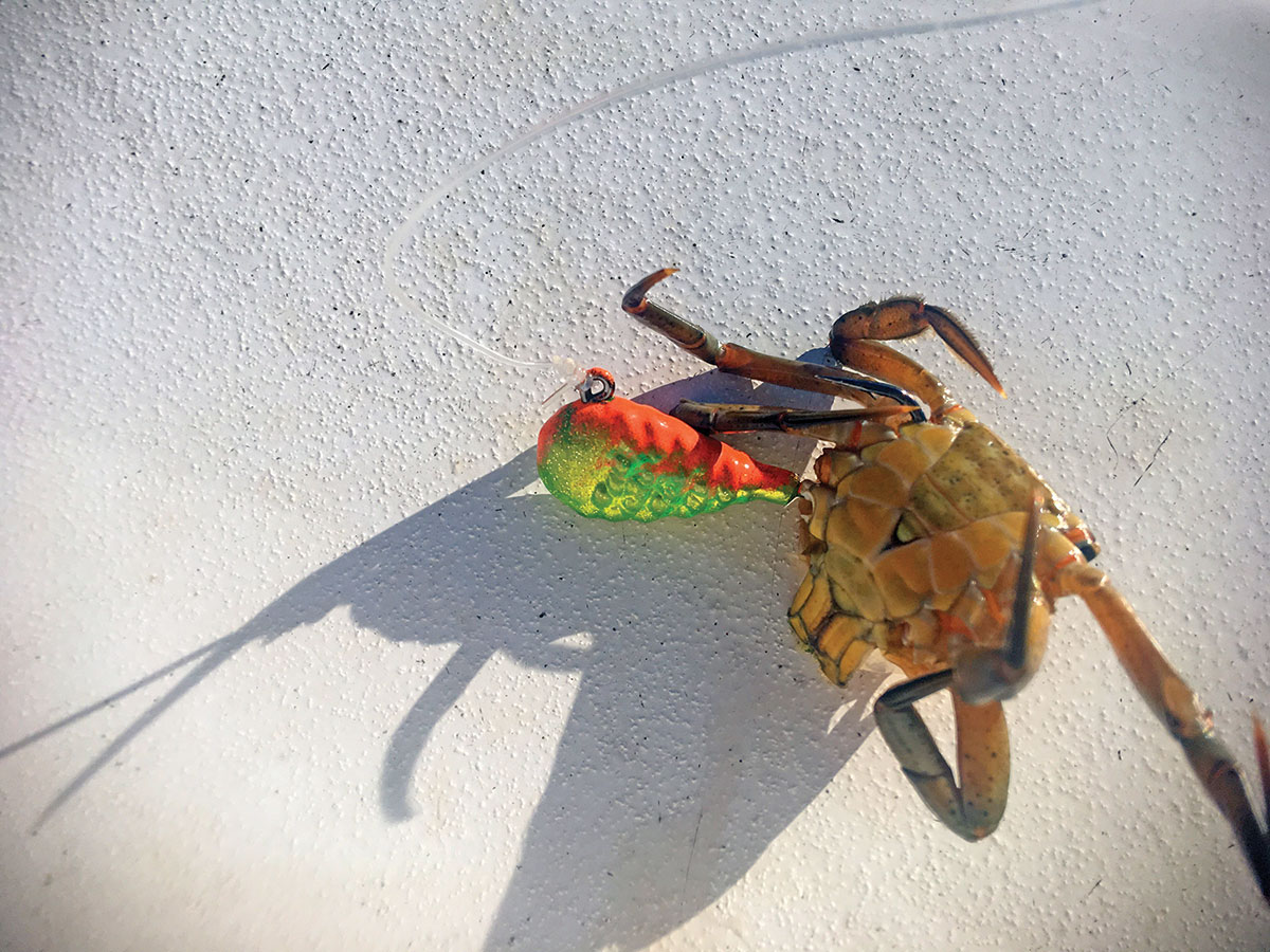 whole green crab
