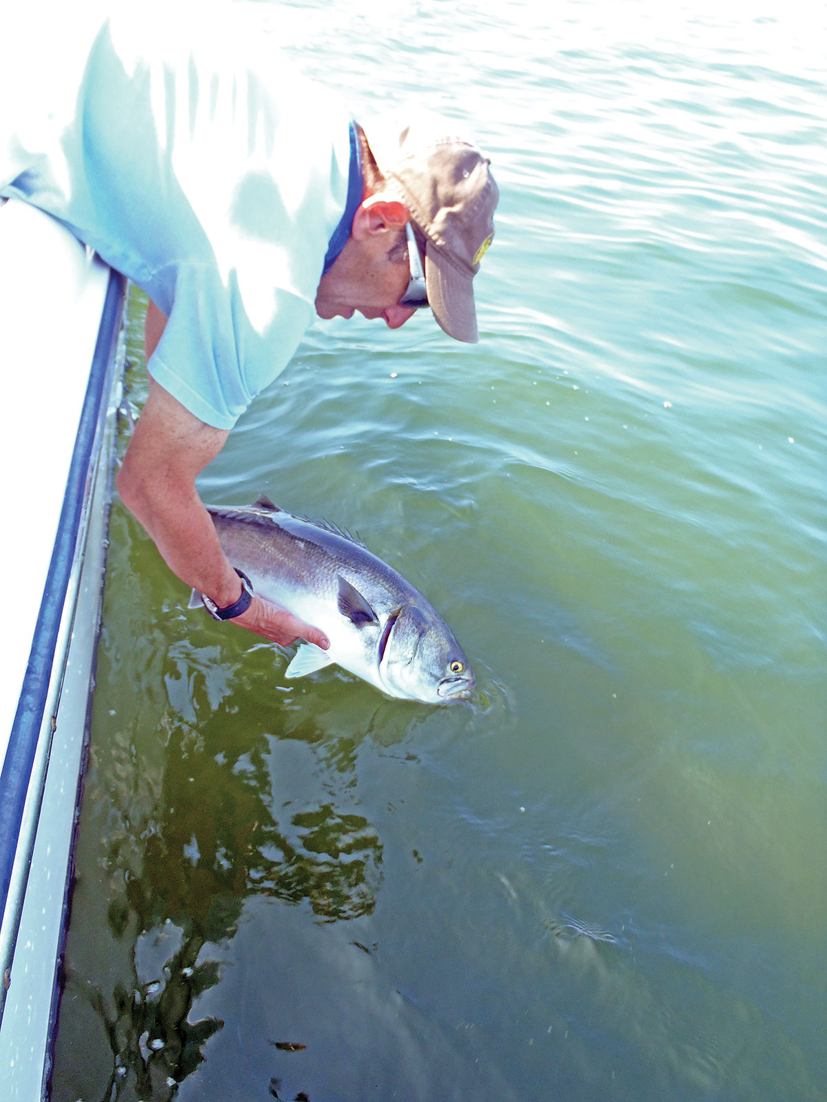 In warm water, bluefish need more time to be revived.
