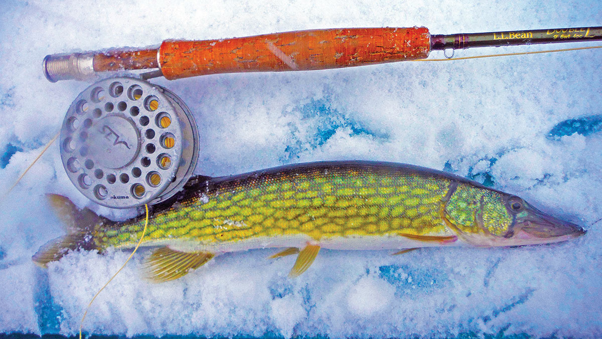 Flies are a great option when targeting December pickerel,