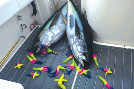 A pair of tuna that fell to rainbow machine side trackers.